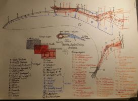 The ultimate pterosaur wing anatomy guide by TheDubstepAddict