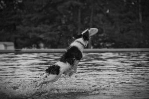 Out of The Water to Snatch A Frisbee by SpAzZnaticShuRIken