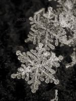 SNOWFLAKE 3 by Iris-cup