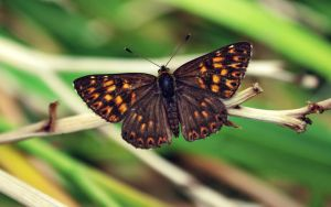 The Duke of Burgundy by blackasmodeus