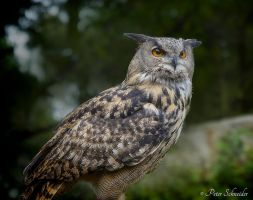 Wise eyes. by Phototubby