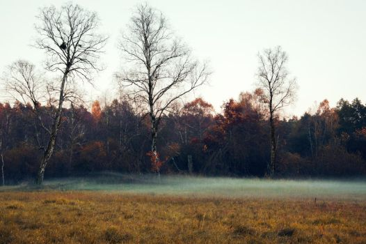 forrest by caryca91