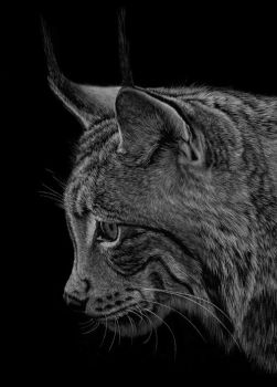 Lynx by PencilSessions
