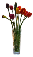 Tulips In Vase Cut Out by ManicHysteriaStock