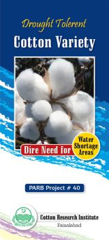 Cotton drought brochure by Shaket
