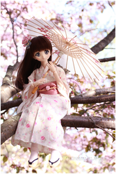 Midst cherry blossoms by sherimi