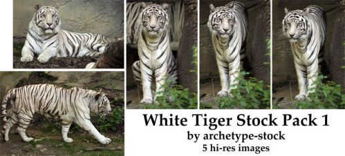 White Tiger Stock Pack 1 by archetype-stock