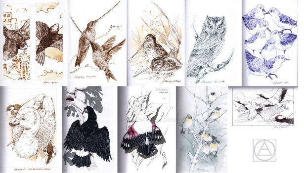 Inktober Birds by Cyoan