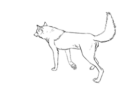 Wolf walking in a circle by Axxirah