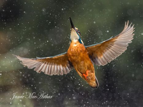 UP UP and away by Jamie-MacArthur
