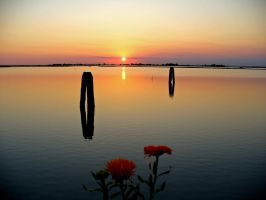 Flowers watch the sunset by Roji-Hachi
