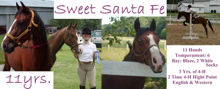 Horse Lease ~ Sweet Santa Fe by Lovely-DreamCatcher