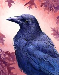 Crow by Alanpaints