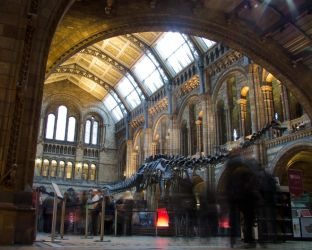 Natural History Museum, London by AstarothSquirrel