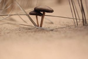 Mushroom landscape stock by Sleepwalker-stock