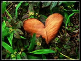 Heart Shaped Leaf by italiansushi