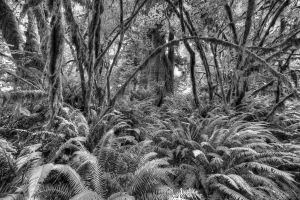 Ferns in Hall of Mosses by grodpro