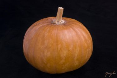 Pumpkin by PhTRIPwood
