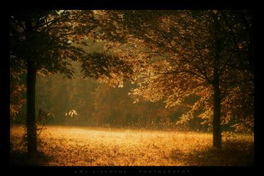 The Clearing by Crossie