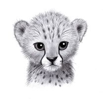 Baby Cheetah by zdrer456