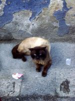 Street cats 3 by ArcasCronifer