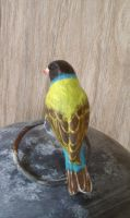 Gouldian Finch - Rear View by Batalha-Enterprises