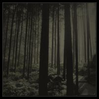 Deep forest lullaby II by CatchMe-22