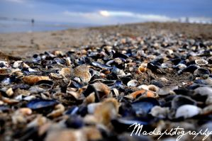 Shells by madaphotography
