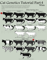Cat Genetics Tutorial Part 4 (White) by Spotted-Tabby-Cat