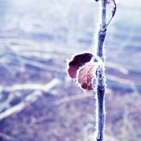first frost 3 by all17