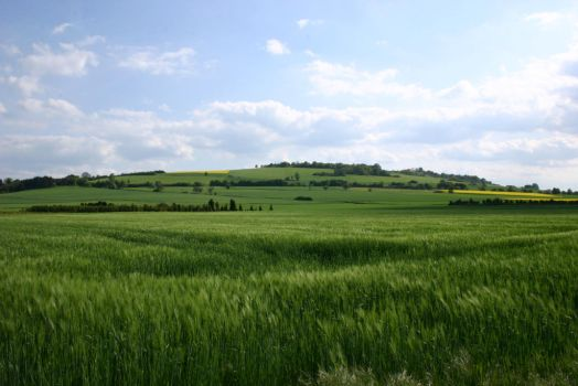 Green Landscape Stock by LuDa-Stock