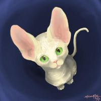 Sphinx kitten by katzendiosa