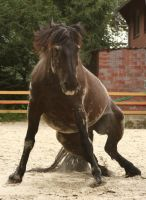 stock horse standing up with sand by Nexu4
