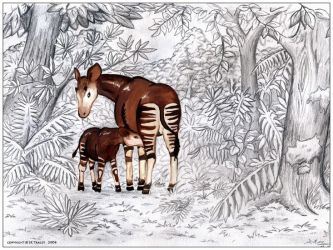 Okapi by jrtracey