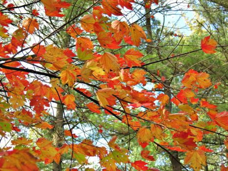 Bright Orange Leaves by Michies-Photographyy