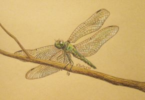 Dragonfly by Umberink