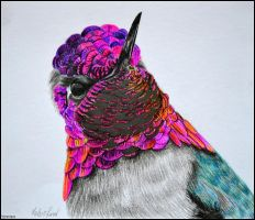 Portrait of hummingbird by Verenique