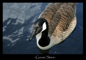 Goose Stare by SBurgess08