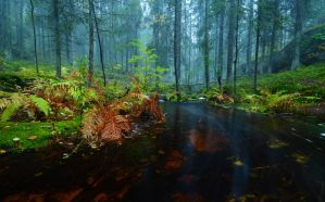 Foggy Forest by comsic