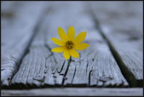 Hope by Mr-T123