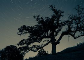 Star Trail Tree by Caitiekabob