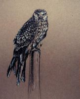 Daily sketch 13 - Red Kite by Crateris