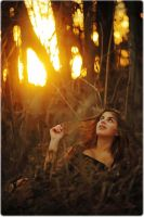 gold forest by shuka4