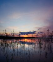Sunset through the Reed by DeingeL