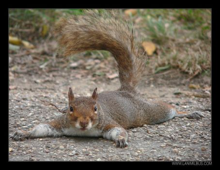 Spread Eagle Squirrel by LanimilbuSx