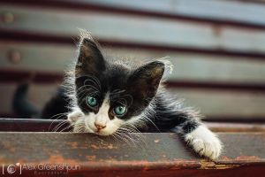 Curious Mr. Whiskers by alexgphoto