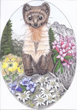 Marten-in-alps by barbcast