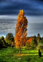 Forever autumn by fiamen