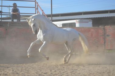 DWP FREE HORSE STOCK 241 by DancesWithPonies