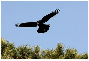 As Crow Flies by In-the-picture